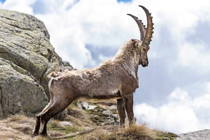 Nationalpark Hohe Tauern –Sommerurlaub in Dorfgastein, Gasteinertal – Hoisbauer